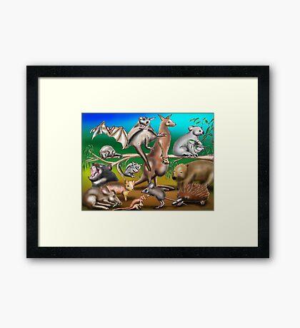 Australian Marsupials Framed Print