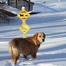 "The Sign Says "" Golden Retriever Crossing!"" by goldnzrule"