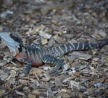 Lizard - Jenolan Caves by Andrew Dodds