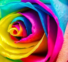 Poetic Colorful Rose by MMPhotographyUK