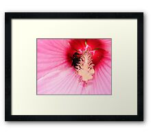 Bumble Bee Buried Framed Print