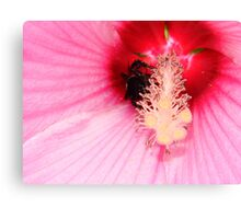 Bumble Bee Buried Canvas Print