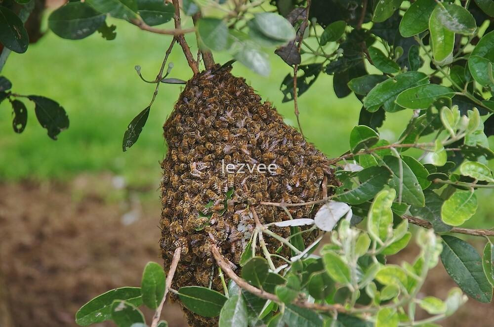 A swarm of bees by lezvee