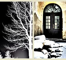 Tree Silhouette and The Old School Door by ©The Creative  Minds