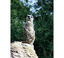 Standing on guard Photographic Print