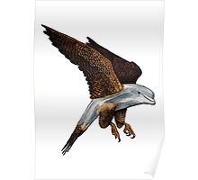 Peregrine Dolphin Poster