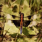 Poplar Grove Dragonfly by PineSinger