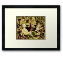 Poplar Grove Dragonfly Framed Print