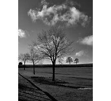 Leafless tree Photographic Print