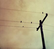 Birds on a Wire by LawsonImages