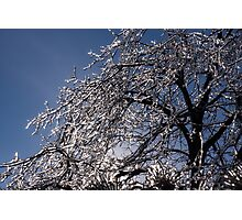 Sparkling Icy Tree - Mother Nature's Decoration Photographic Print
