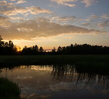 Hot Summer Sunset at the Farm by Georgia Mizuleva