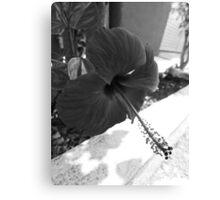 ©GS Red Hibiscus IA Monochrome Canvas Print