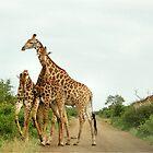 COMPETITION TIME! - GIRAFFE – Giraffa Camelopardalis (KAMEELPERD) by Magaret Meintjes