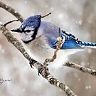 """Winter Jay"" by Melinda Stewart Page"