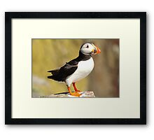 Puffin My Chest Out Framed Print