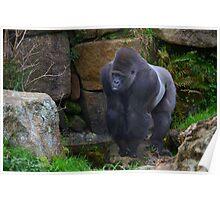 Gorilla II Poster