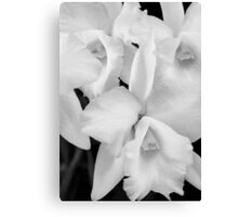 Orchidstration Canvas Print