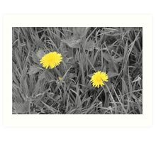 The lonely Dandelions Art Print