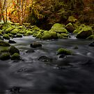 Lake Creek Glow ~ Fall Colors ~ by Charles & Patricia   Harkins ~ Picture Oregon