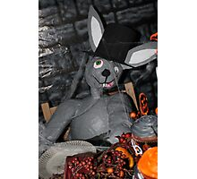 Crazy Rabbit Photographic Print