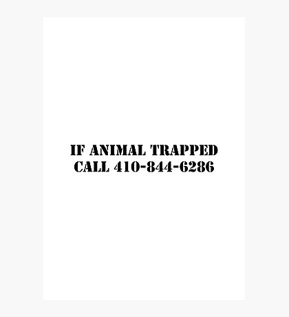 The Wire - If Animal Trapped Photographic Print