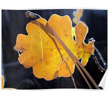 Leaves of Oak and Pine Poster