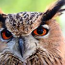 Eagle Owl Up Close by imagetj