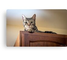 Cabinet Fever Canvas Print