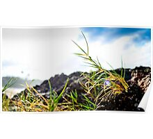 Grass hopper view of ocean Poster