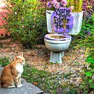 The Toilet Garden by imagetj