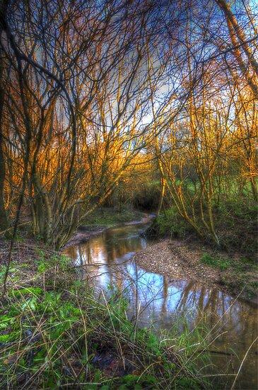 Winter Stream by Nigel Bangert