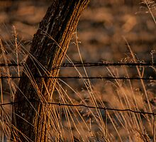 crooked post by Michelle Danker