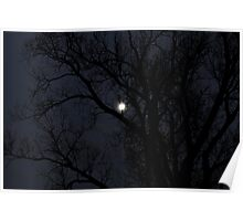 the moon behind a cottonwood tree Poster