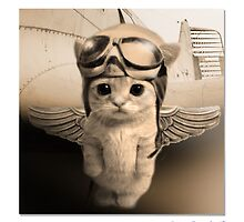 "CATS IN HATS ""AMEWLIA EARHART"" by Patty McNally"