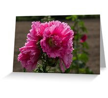 Sunny Vivid Pink Hollyhocks in a Cottage Garden Greeting Card
