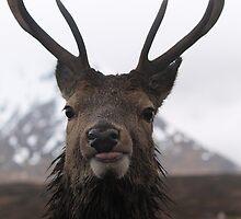 Stag on Rannoch Moor by Pat Millar