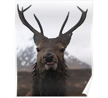 Stag on Rannoch Moor Poster