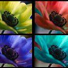 Four Beauties  by Nicole  Markmann Nelson