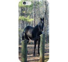 Black Beauty in a yard  iPhone Case/Skin