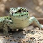 Lizard Closeup by hummingbirds