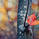 Fall by indiabluephotos