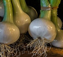 Onions. by Bette Devine