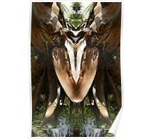 Spring Water Dog - Nature's Mirror Image Poster