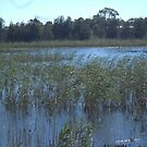 Seaford wetlands by AmandaWitt