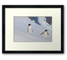 Gentoo Penguins On The Slippery Slope Framed Print