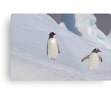 Gentoo Penguins On The Slippery Slope Metal Print