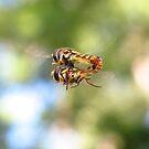 Hovering pair  by KiriLees