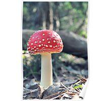 Little Mushroom Poster