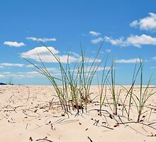Sand Grass at Sisters Beach by Lissie E J